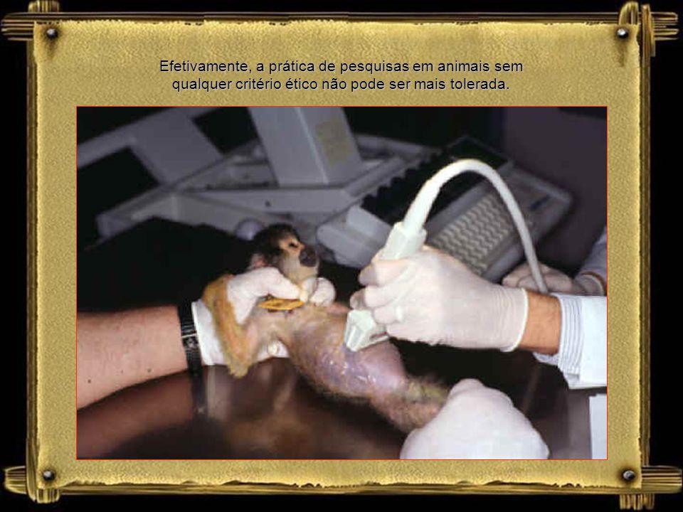 Efetivamente, a prática de pesquisas em animais sem qualquer critério ético não pode ser mais tolerada.