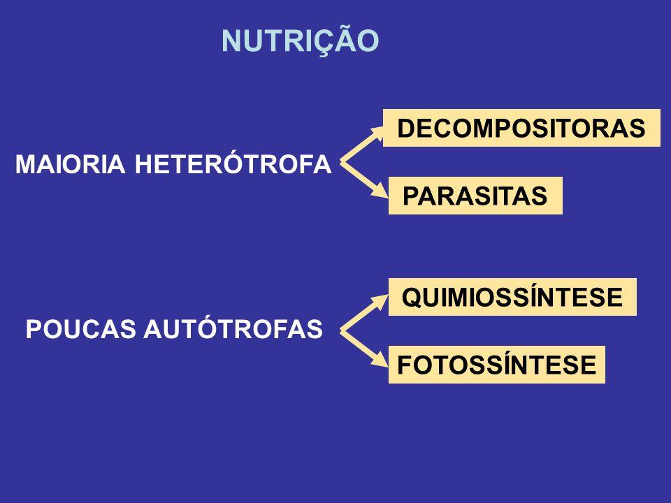NUTRIÇÃO DECOMPOSITORAS MAIORIA HETERÓTROFA PARASITAS QUIMIOSSÍNTESE