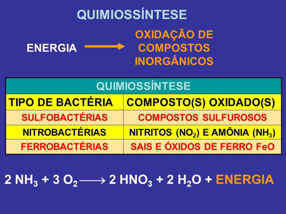 QUIMIOSSÍNTESE 2 NH3 + 3 O2  2 HNO3 + 2 H2O + ENERGIA