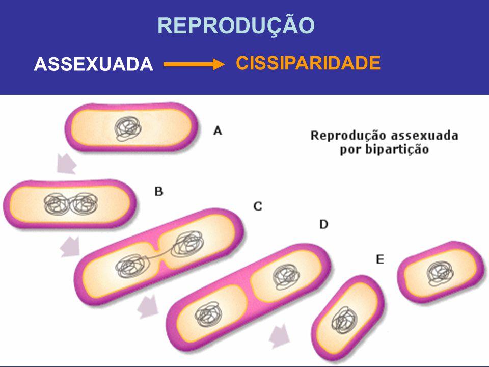REPRODUÇÃO ASSEXUADA CISSIPARIDADE