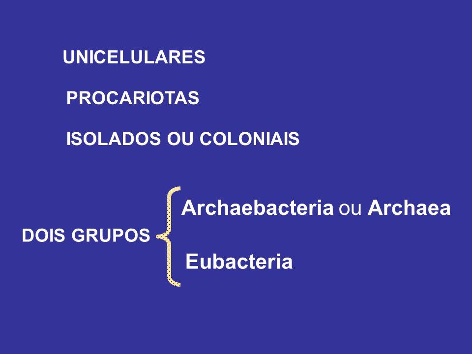 Archaebacteria ou Archaea