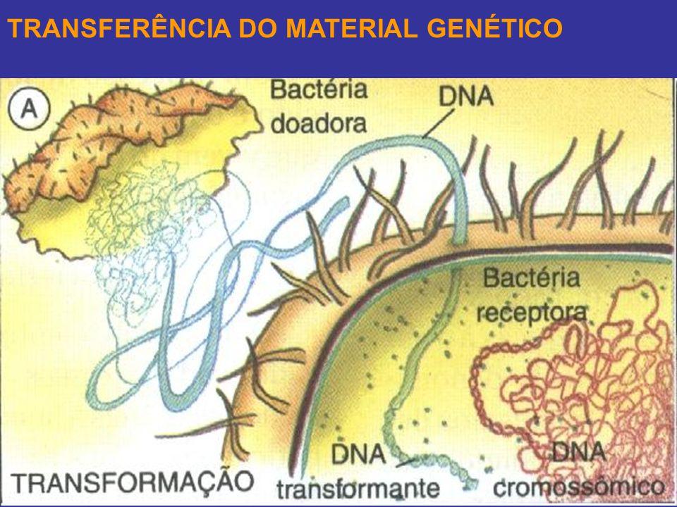 TRANSFERÊNCIA DO MATERIAL GENÉTICO