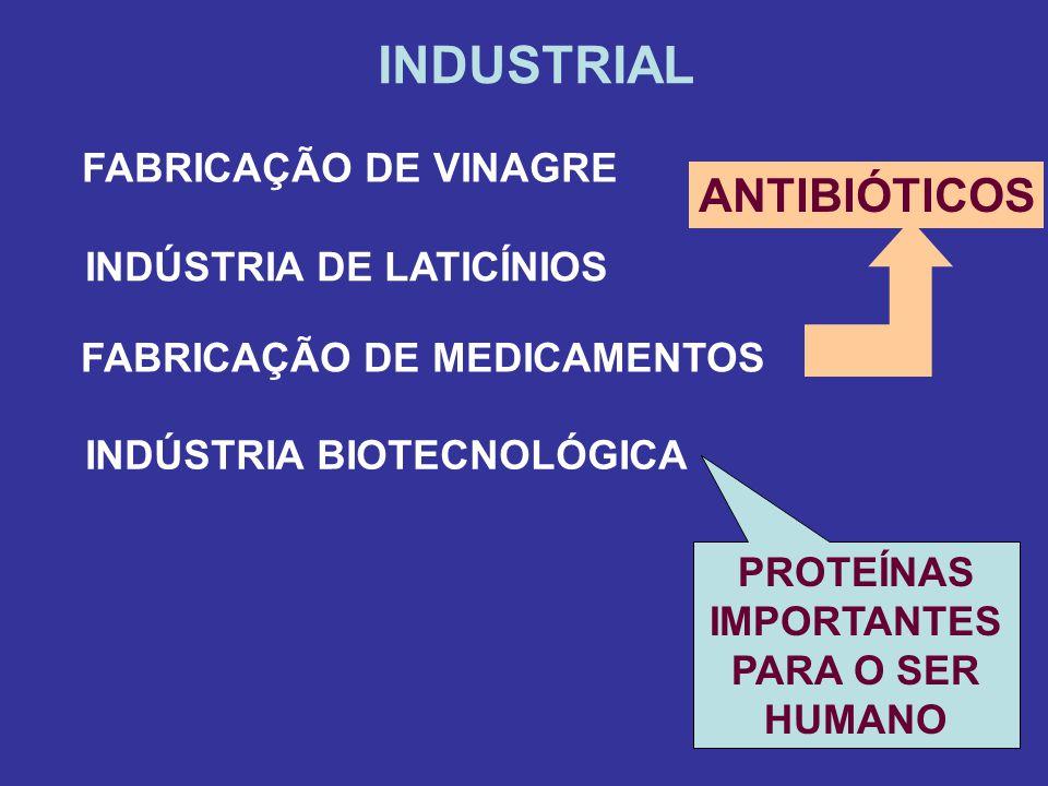 INDÚSTRIA DE LATICÍNIOS PROTEÍNAS IMPORTANTES PARA O SER HUMANO