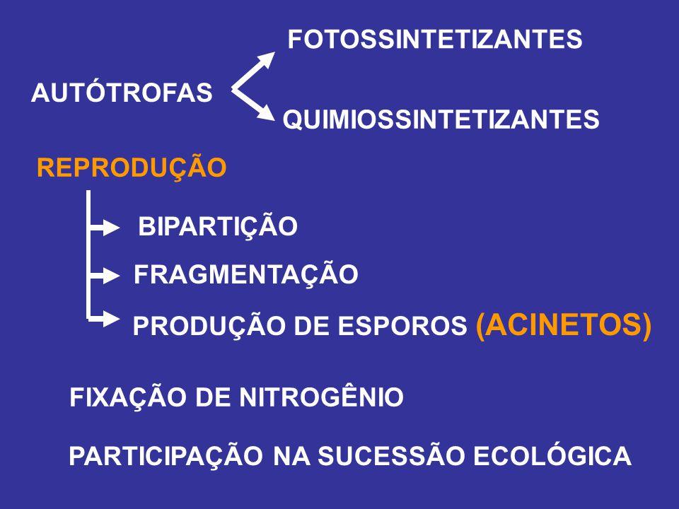 PRODUÇÃO DE ESPOROS (ACINETOS)