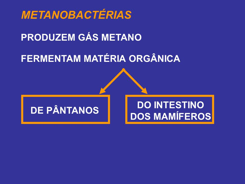 DO INTESTINO DOS MAMÍFEROS
