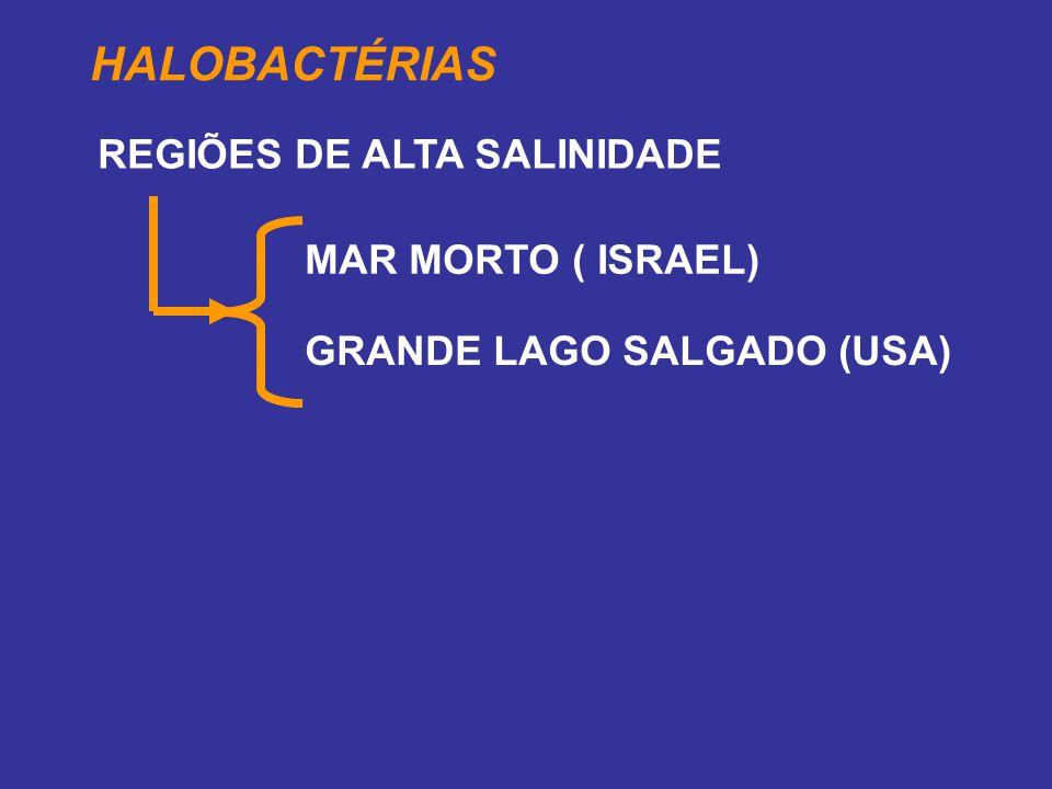 HALOBACTÉRIAS REGIÕES DE ALTA SALINIDADE MAR MORTO ( ISRAEL)