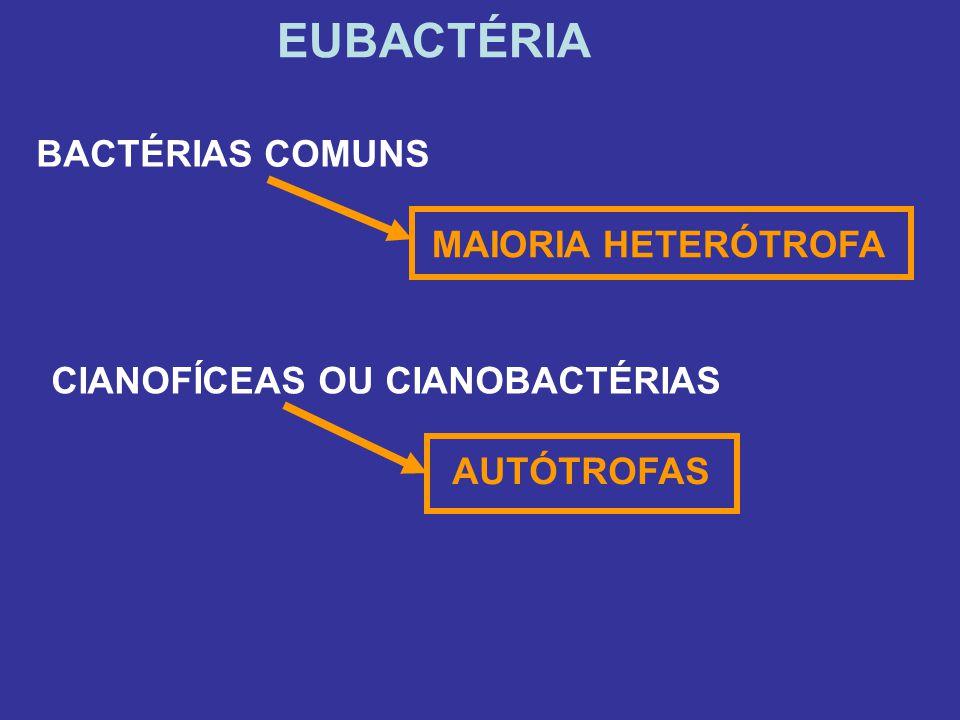 EUBACTÉRIA BACTÉRIAS COMUNS MAIORIA HETERÓTROFA