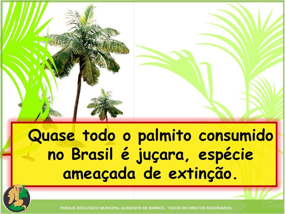 Quase todo o palmito consumido no Brasil é juçara, espécie ameaçada de extinção.