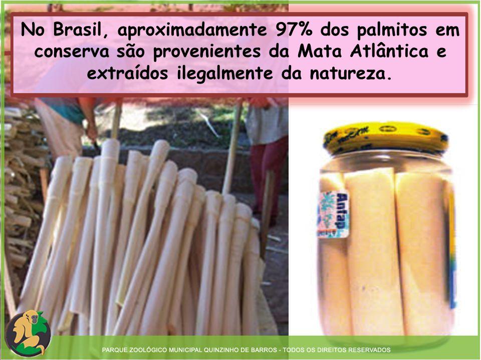No Brasil, aproximadamente 97% dos palmitos em conserva são provenientes da Mata Atlântica e extraídos ilegalmente da natureza.