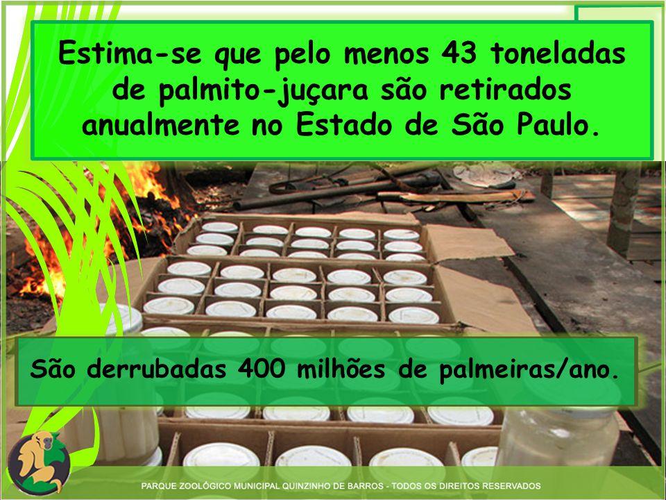 São derrubadas 400 milhões de palmeiras/ano.