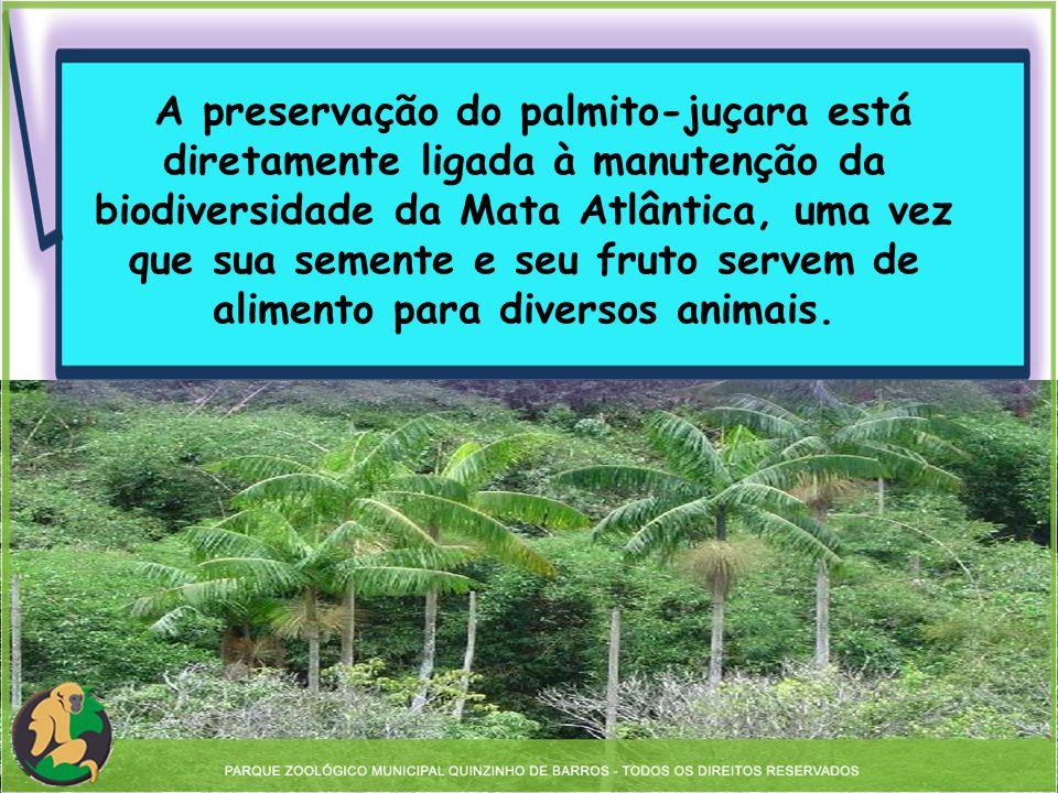 A preservação do palmito-juçara está diretamente ligada à manutenção da biodiversidade da Mata Atlântica, uma vez que sua semente e seu fruto servem de alimento para diversos animais.