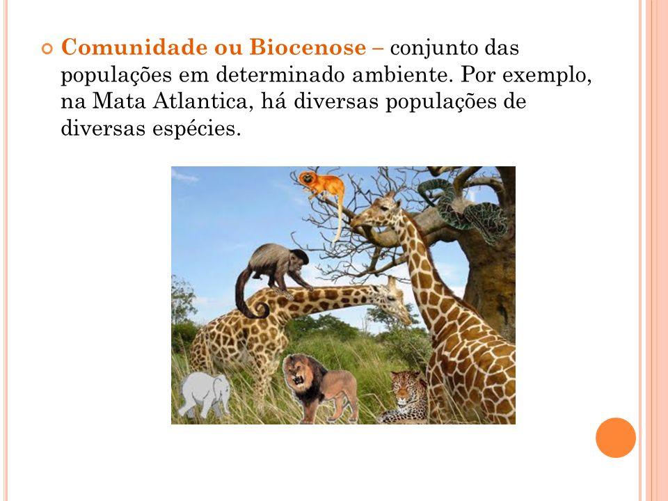Comunidade ou Biocenose – conjunto das populações em determinado ambiente.