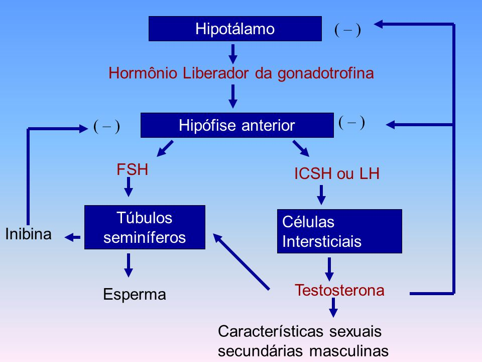 Hormônio Liberador da gonadotrofina