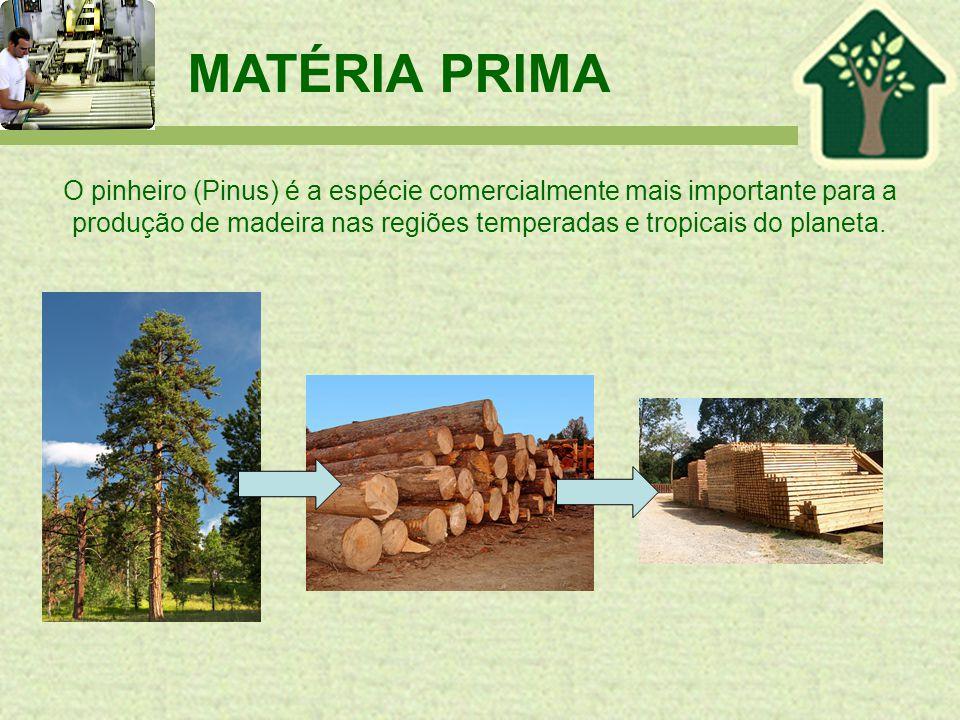 MATÉRIA PRIMA O pinheiro (Pinus) é a espécie comercialmente mais importante para a produção de madeira nas regiões temperadas e tropicais do planeta.