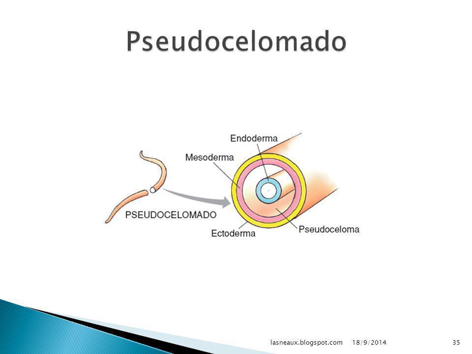 Pseudocelomado lasneaux.blogspot.com 02/04/2017