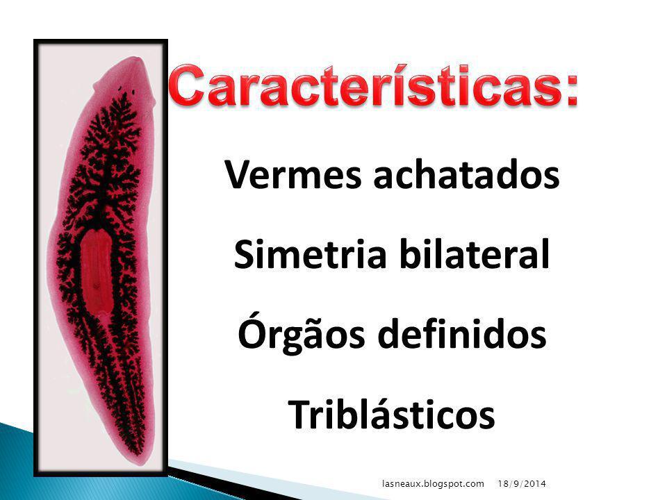 Características: Vermes achatados Simetria bilateral Órgãos definidos