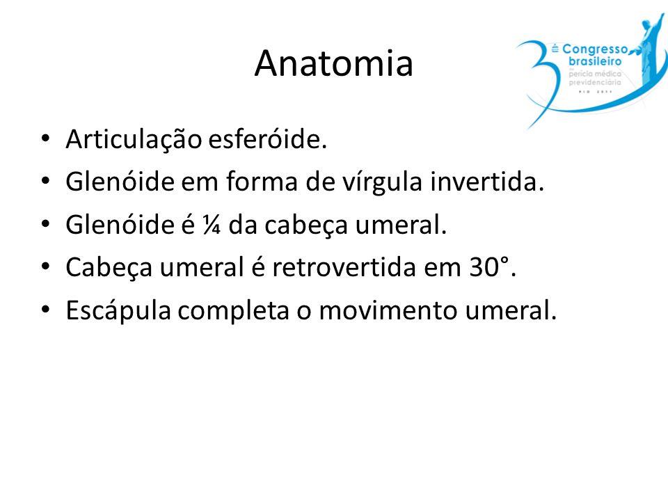 Anatomia Articulação esferóide.