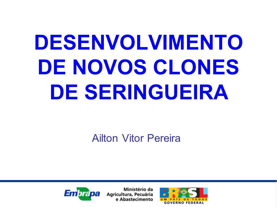 DESENVOLVIMENTO DE NOVOS CLONES DE SERINGUEIRA
