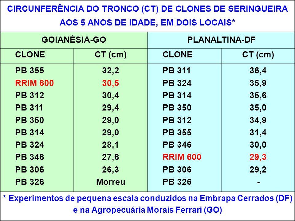 CIRCUNFERÊNCIA DO TRONCO (CT) DE CLONES DE SERINGUEIRA