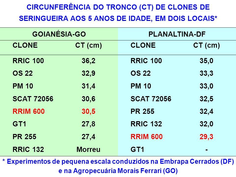 CIRCUNFERÊNCIA DO TRONCO (CT) DE CLONES DE SERINGUEIRA AOS 5 ANOS DE IDADE, EM DOIS LOCAIS*