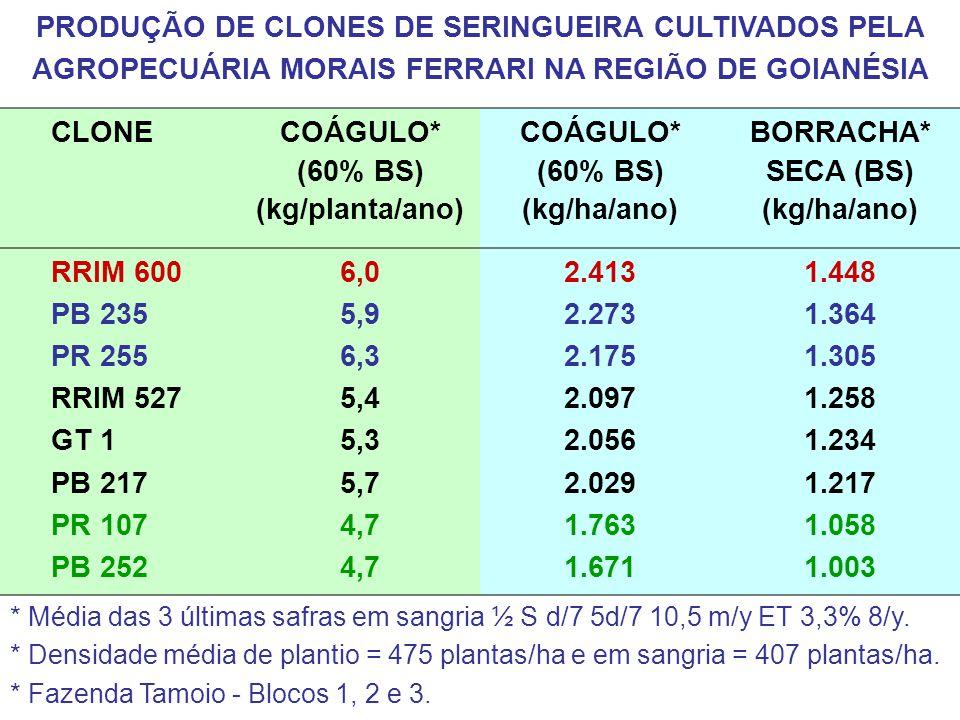 COÁGULO* (60% BS) (kg/planta/ano)