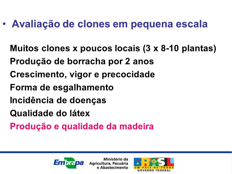 Avaliação de clones em pequena escala