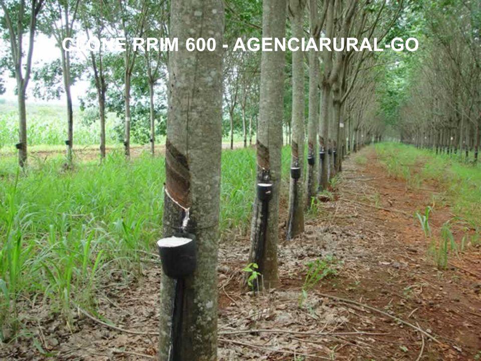 CLONE RRIM 600 - AGENCIARURAL-GO