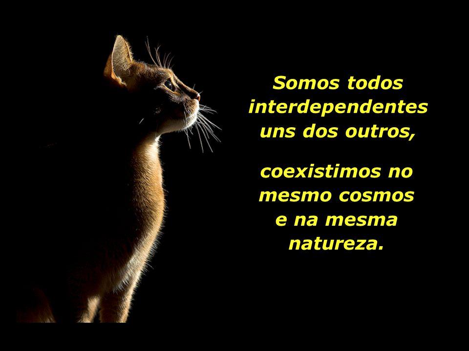 Somos todos interdependentes uns dos outros,