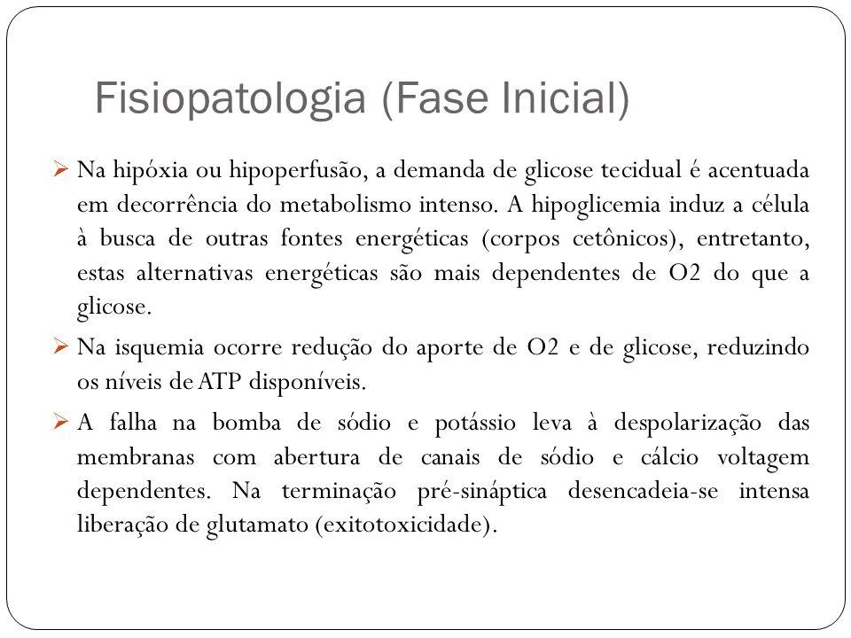 Fisiopatologia (Fase Inicial)