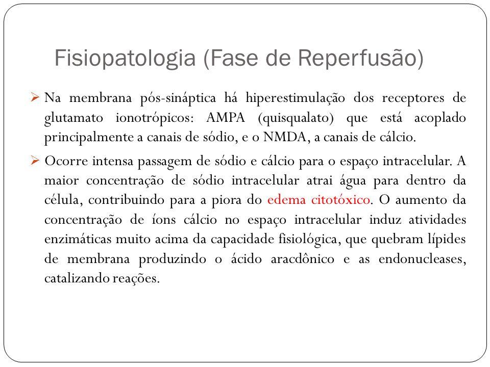 Fisiopatologia (Fase de Reperfusão)