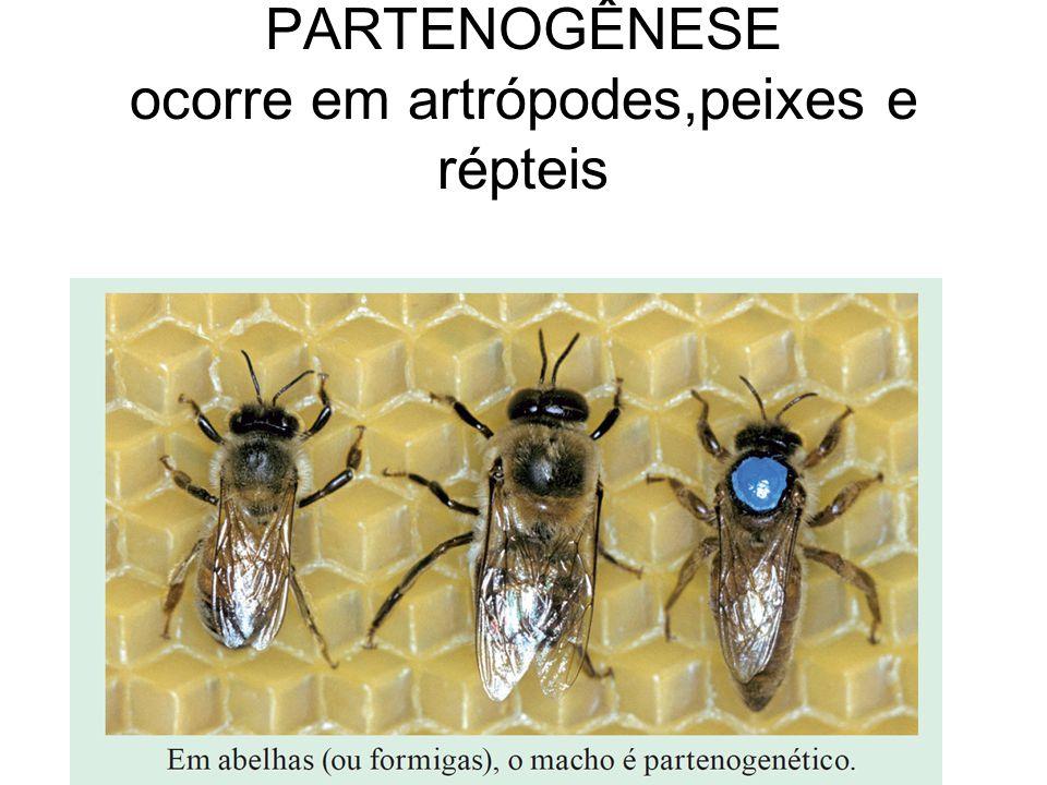PARTENOGÊNESE ocorre em artrópodes,peixes e répteis
