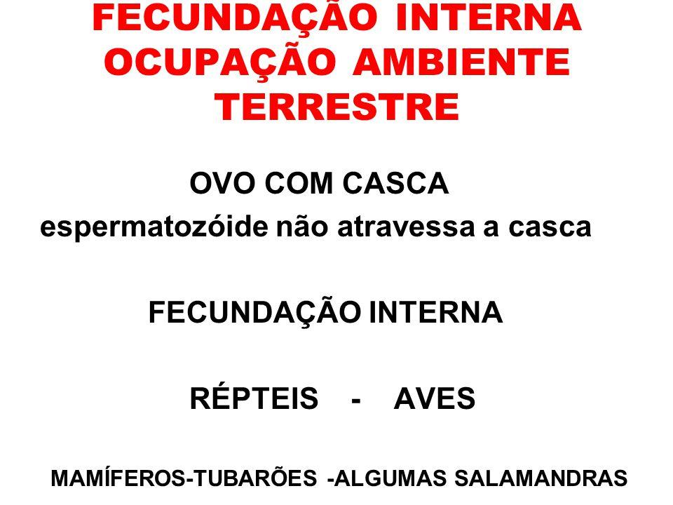 FECUNDAÇÃO INTERNA OCUPAÇÃO AMBIENTE TERRESTRE