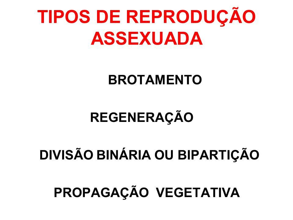 TIPOS DE REPRODUÇÃO ASSEXUADA
