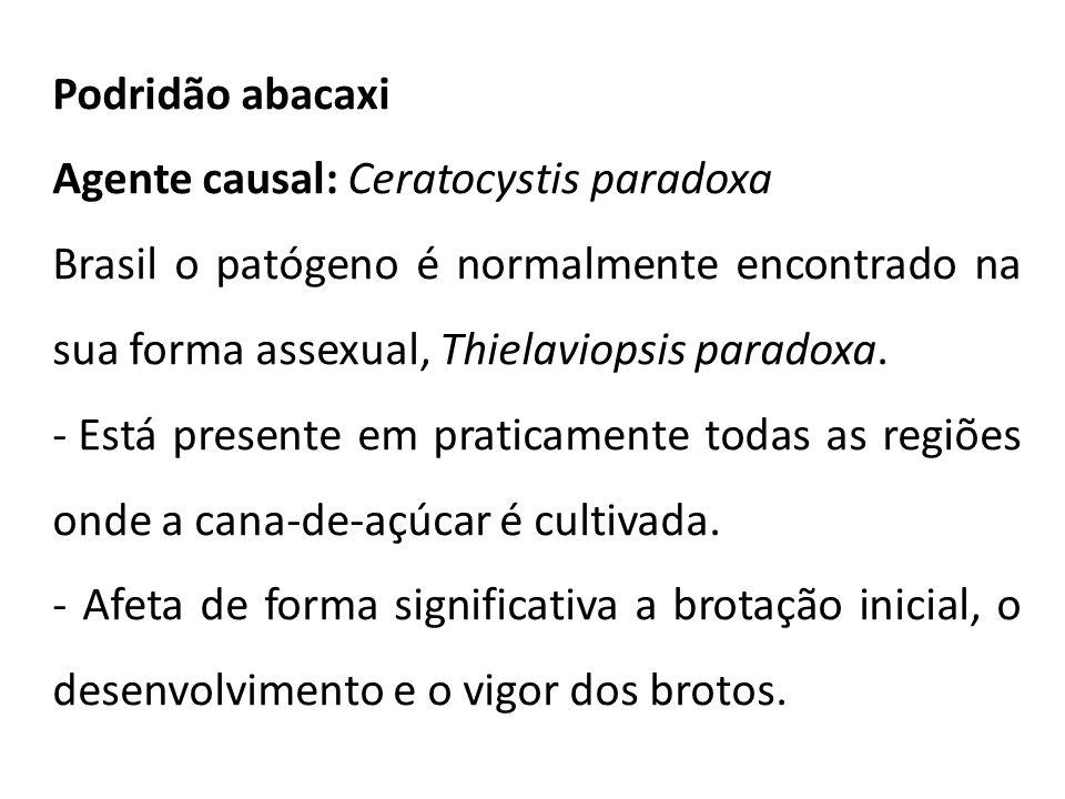 Podridão abacaxi Agente causal: Ceratocystis paradoxa. Brasil o patógeno é normalmente encontrado na sua forma assexual, Thielaviopsis paradoxa.