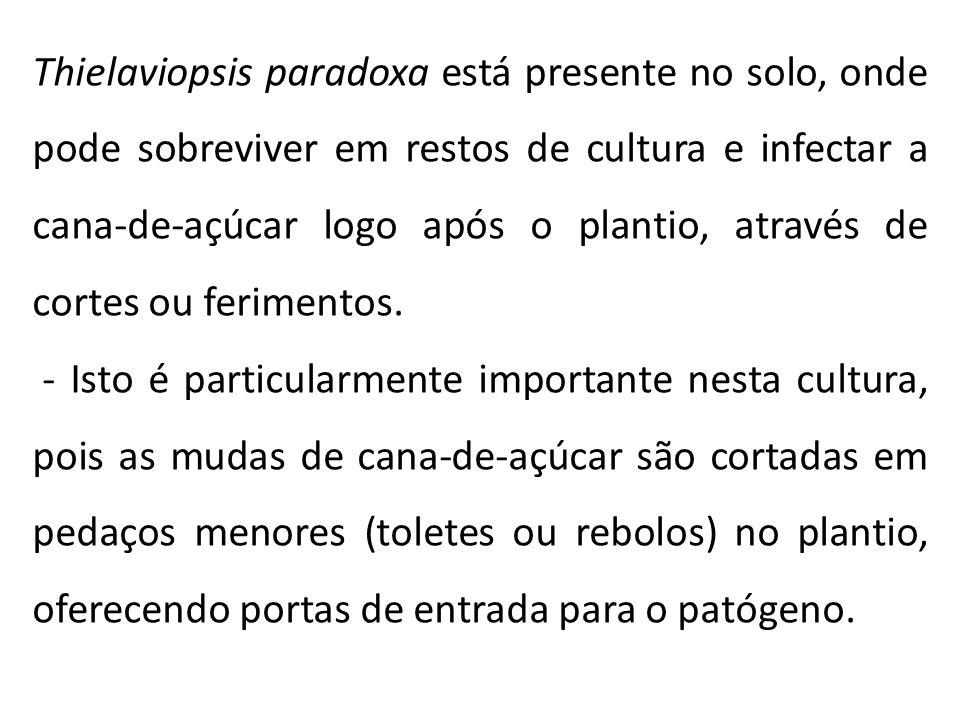 Thielaviopsis paradoxa está presente no solo, onde pode sobreviver em restos de cultura e infectar a cana-de-açúcar logo após o plantio, através de cortes ou ferimentos.