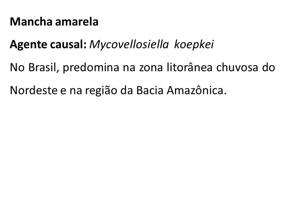 Mancha amarela Agente causal: Mycovellosiella koepkei.