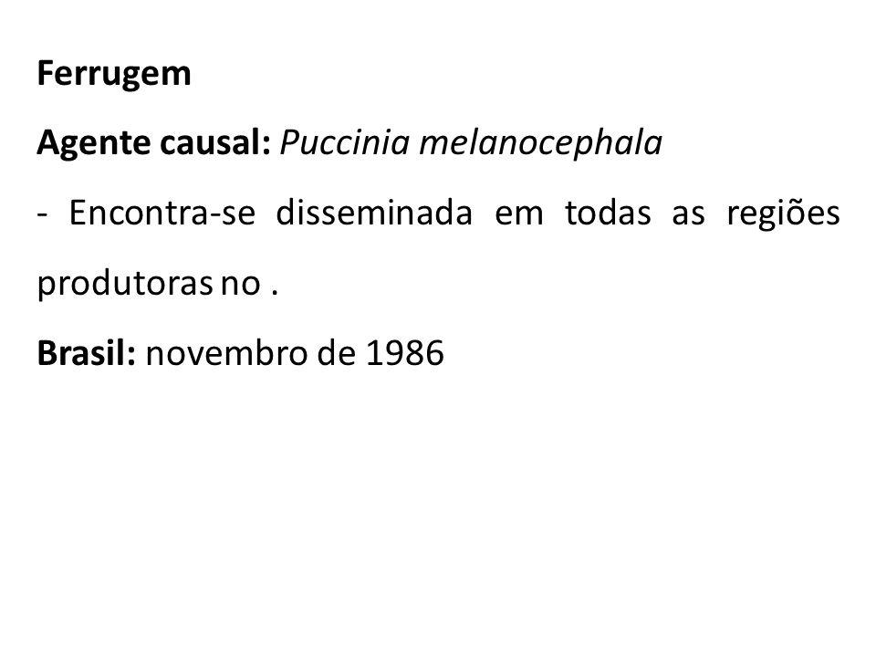 Ferrugem Agente causal: Puccinia melanocephala. - Encontra-se disseminada em todas as regiões produtoras no .
