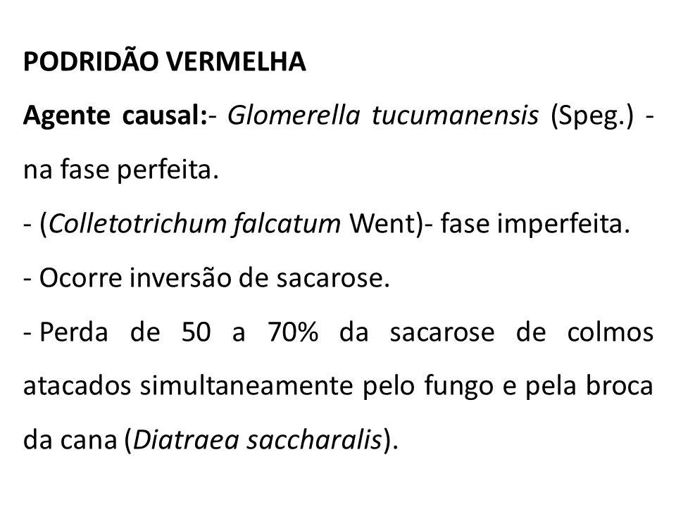 PODRIDÃO VERMELHA Agente causal:- Glomerella tucumanensis (Speg.) - na fase perfeita. - (Colletotrichum falcatum Went)- fase imperfeita.