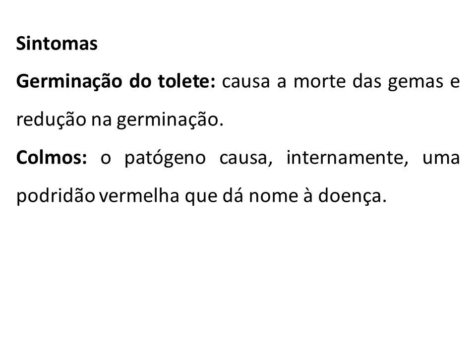Sintomas Germinação do tolete: causa a morte das gemas e redução na germinação.