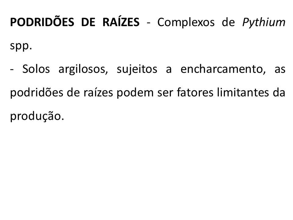 PODRIDÕES DE RAÍZES - Complexos de Pythium spp.