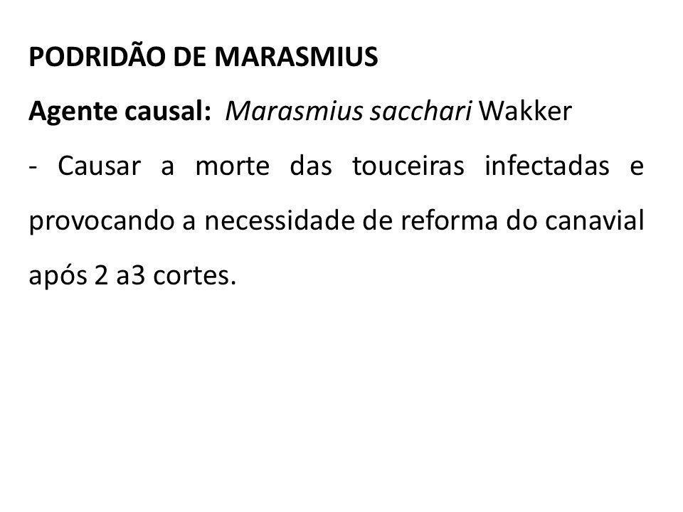 PODRIDÃO DE MARASMIUS Agente causal: Marasmius sacchari Wakker.
