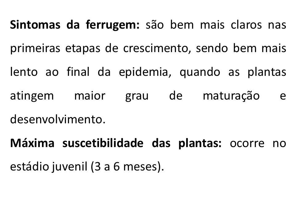 Sintomas da ferrugem: são bem mais claros nas primeiras etapas de crescimento, sendo bem mais lento ao final da epidemia, quando as plantas atingem maior grau de maturação e desenvolvimento.