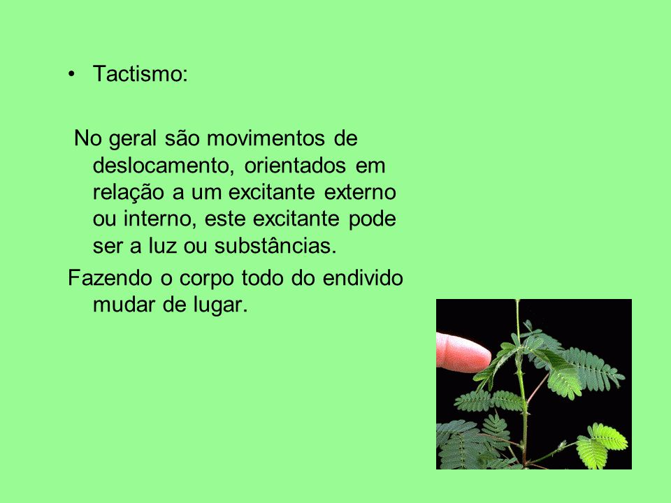 Tactismo: