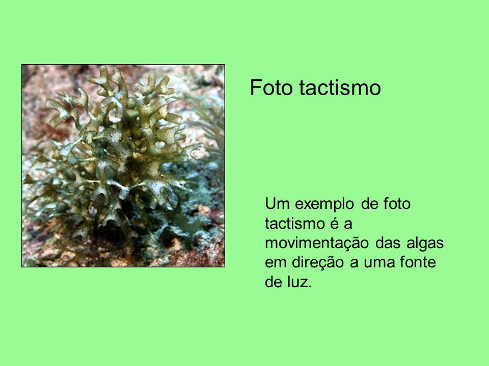 Foto tactismo Um exemplo de foto tactismo é a movimentação das algas em direção a uma fonte de luz.