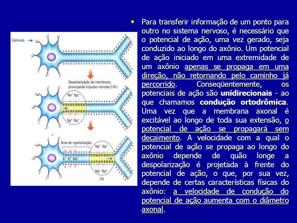 Para transferir informação de um ponto para outro no sistema nervoso, é necessário que o potencial de ação, uma vez gerado, seja conduzido ao longo do axônio.