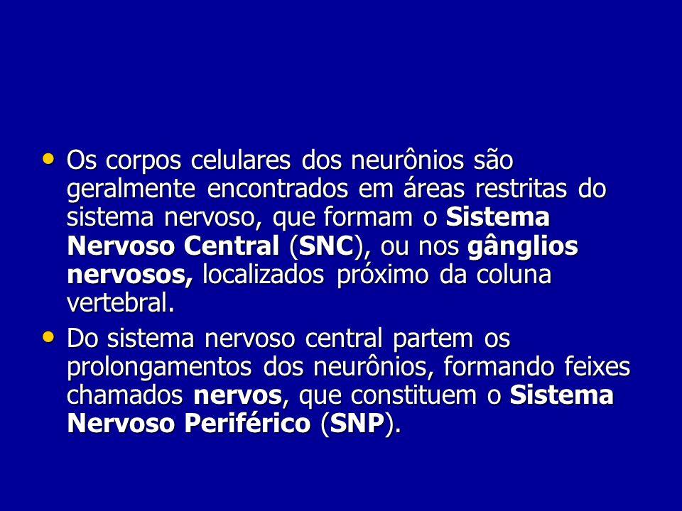 Os corpos celulares dos neurônios são geralmente encontrados em áreas restritas do sistema nervoso, que formam o Sistema Nervoso Central (SNC), ou nos gânglios nervosos, localizados próximo da coluna vertebral.
