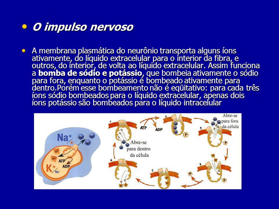 O impulso nervoso