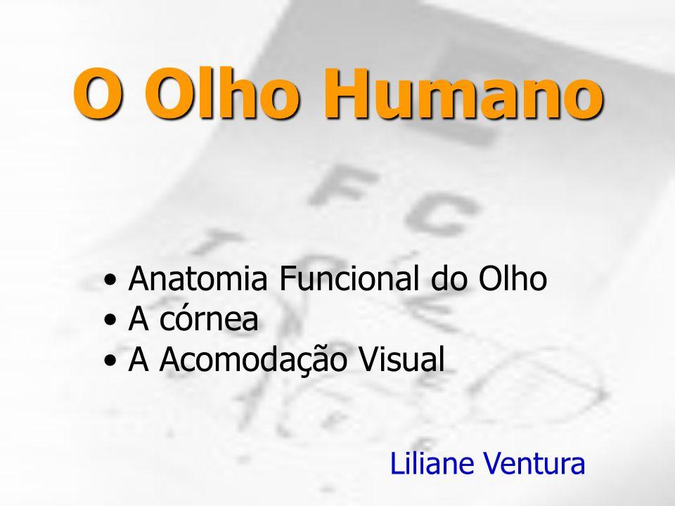 O Olho Humano Anatomia Funcional do Olho A córnea A Acomodação Visual