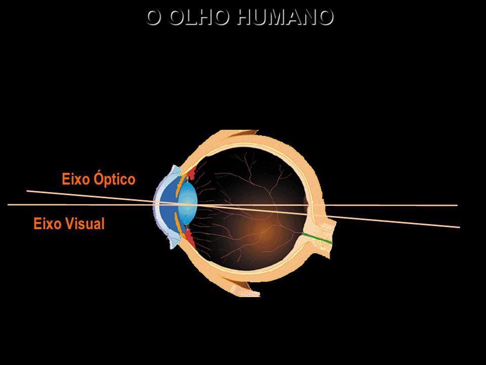O OLHO HUMANO Eixo Óptico Eixo Visual