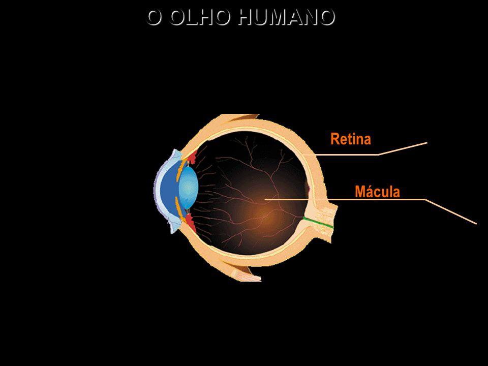 O OLHO HUMANO Retina Mácula